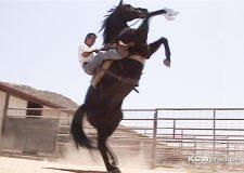 Alex Wen Horse Outlaw